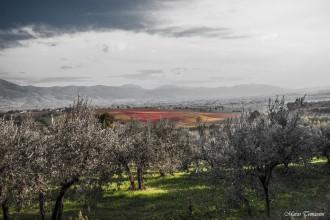 Sagrantino Montefalco Umbria